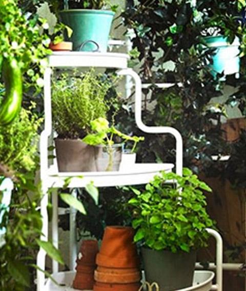 Garten und Balkon Pflanzen